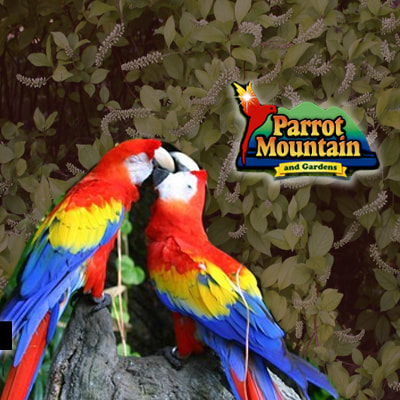 Parrot Mountain in Pigeon Forge